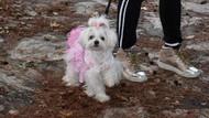 Marmaris'te köpek güzellik yarışması