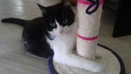Kedi Fiocco evden kaçınca mahkemelik oldu