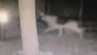 Bodrum'da depremden 4 dakika önce çekilen görüntüler şoke etti!