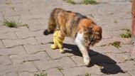 Bacakları kopan hamile kediye protez bacak