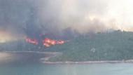 Ayvalık Şeytan Sofrasında yangın! Çam ve zeytin ağaçları kül oldu