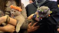 Ankara'da Kedi Güzellik Festivali'nde 200 kedi yarıştı