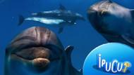 Hadi ipucu sorusu: Marmara Denizi'nde görülen dünyanın en yaygın yunus balığı türü hangisi?