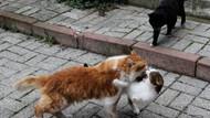 İstanbul kedileri Reuters objektifine poz verdi