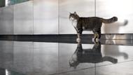 CHP'nin kedisi Şero ameliyat oldu! Sağlık durumu nasıl?