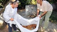 Bodrum'da 6 köpeği zehirli kıyma yedirip öldürdüler