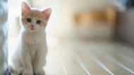 ABD'de yavru kediler deney için öldürülüyor
