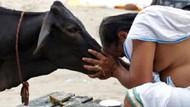 Hindistan'da bir terzi inek kestiği için linç edilerek öldürüldü
