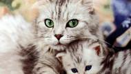 Norveç'te evcil hayvanı doğum yapana 3 gün doğum izni!
