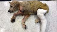 Mardin'de yavru köpeği tüfekle vuran cani yakalandı!