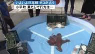 Kahin ahtapot yemek oldu, Japonya elendi
