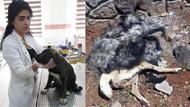 Diyarbakır'da köpeği canlı canlı yaktılar! Yavrusu yaralı