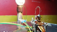 Hamam böceğini elektrikli sandalyede infaz eden heykeltıraşa tutuklama