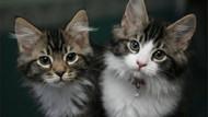 İngiltere kedi ve köpek yavrularının pet shoplarda satışını yasaklıyor
