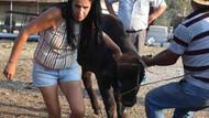 Kurban Bayramı'nın olay boğası İzmir'e getirildi