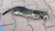 Adana'da vahşet! Yavru kedi 4 bacağı kesilmiş halde bulundu