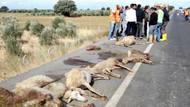 İzmir'de korkunç olay! Koyun sürüsüne yolcu otobüsü çarptı