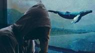 Mavi Balina: İntihar oyununun altında yatan gerçek ne?