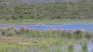 İris Gölü'nün suyu boşaltılarak imara mı açılacak?
