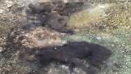 Kırklareli'de yakılmış kedi ve köpek ölüleri bulundu