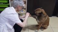 Kanayan patisinin tedavisi için eczaneye gelen köpek ve ona yardım eden güzel insan