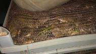 Adıyaman'da bir araçta torbalara konulmuş 3 bin adet canlı kurbağa bulundu!