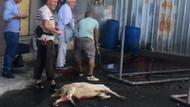 Beyoğlu'nda kurbanlık hayvanları sokakta kestiler