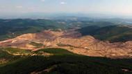 Teyit.org: Kirazlı'da en az 69 bin 595, en fazla 115 bin 992 ağaç kesildi!