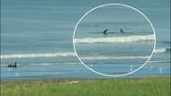 Denizin tadını çıkaran bozayı ve balinanın sıra dışı anları kamerada!