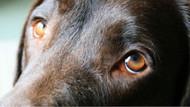 Avusturalya'da köpeğini yürüyüşe çıkarmayanlar para cezası ödeyecek