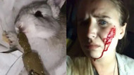Vegan aktivistin tavşanları kurtarma girişimi sonucunda 90 tavşan öldü