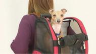 Bagaj zorunluluğu kalktı: Evcil hayvanlar da araç içinde seyahat edebilecek