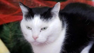 Dünyanın en kötü kedisi Perdita yuva arıyor