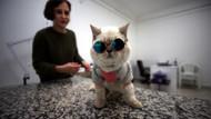 Kedi Naime kliniğin maskotu oldu