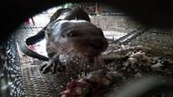 Çin'de vahşi hayvanları canlı canlı pişirip satmaya devam ediyorlar