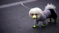 Koronavirüs nedeniyle ilk köpek ölümü yaşandı
