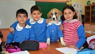 Okullu Köpek Fındık hayatını kaybetti