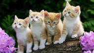 Kediyi enseden tutmak yasaklandı