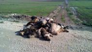 Bursa'da şoke eden köpek katliamı