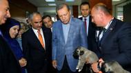 Erdoğan'a yavru köpek hediye ettiler
