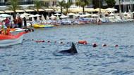 Marmaris'te köpek balığı sanılan yunus korku yarattı