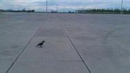 Yenikapı kuşlara emanet