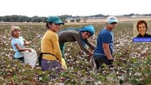 Meclis Çocuk Hakları Alt Komisyonu Urfa'da acı gerçekle karşılaştı: 16 bin öğrenci mevsimlik işçisi