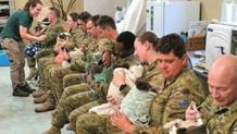 Askerler yangın mağduru koalaları eliyle besledi