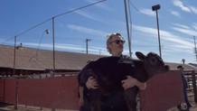 Joaquin Phoenix yeni doğum yapan bir inekle yavrusunu mezbahadan kurtardı