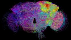 Google, bugüne kadarki en kapsamlı beyin taramasını yayınladı