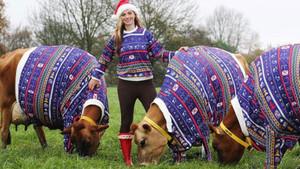 Becky Houze ineklerine kendi kazağından giydirdi