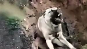 Hatay'da vahşet! Zehirlenip çukura atılan köpek can çekişerek öldü