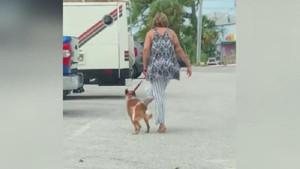 Köpeğine işkence eden kadın gözaltına alındı