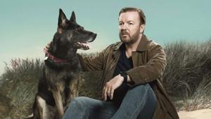 Ricky Gervais'in dizisi After Life 2. yeni sezon ne zaman başlıyor? Netflix açıkladı